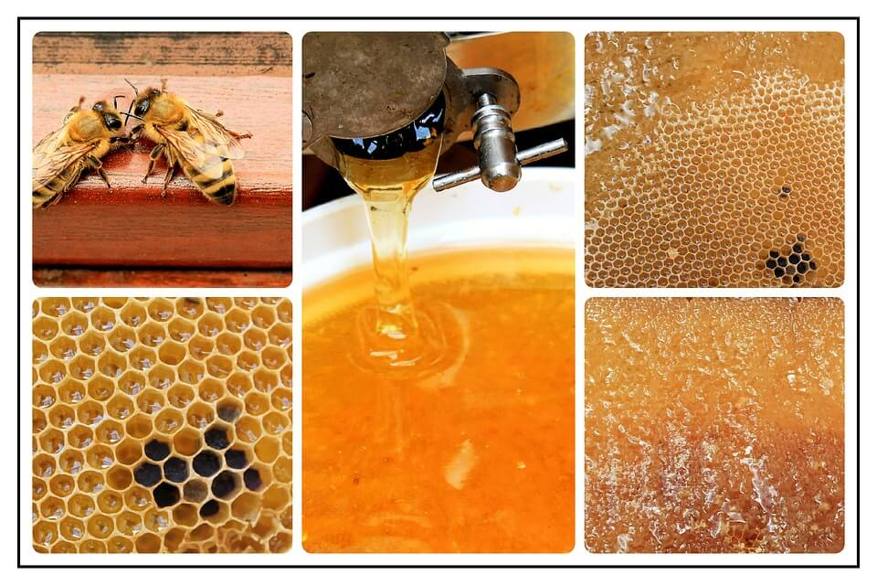 Best Honey Extractor for the Money