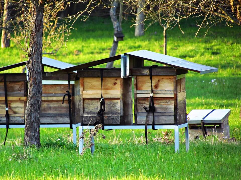 Best Bee Hive Stands