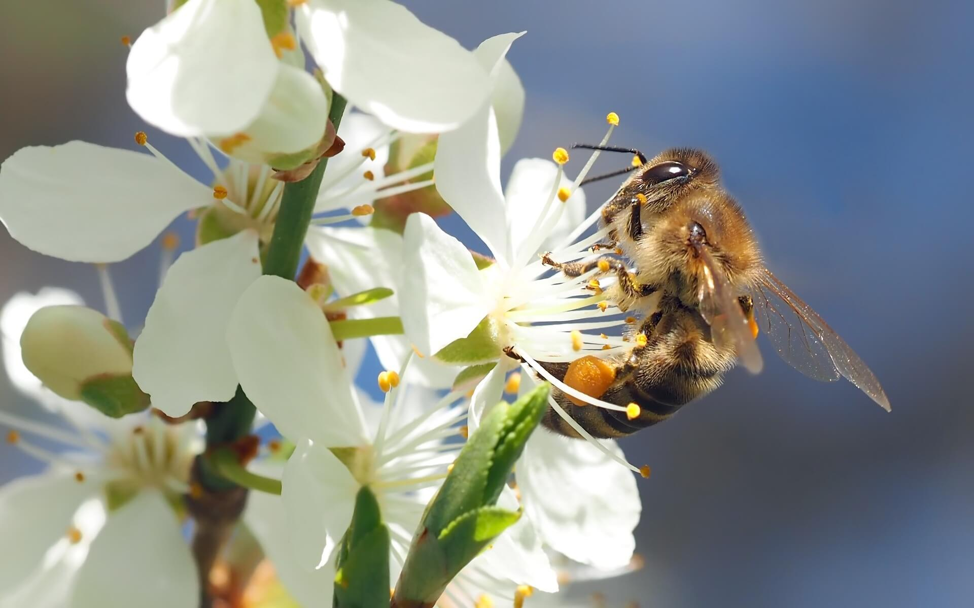 Avoiding Bees and Preventing Bee Stings